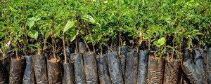 Time for Trees: Let's plant trees. Trees save lives!